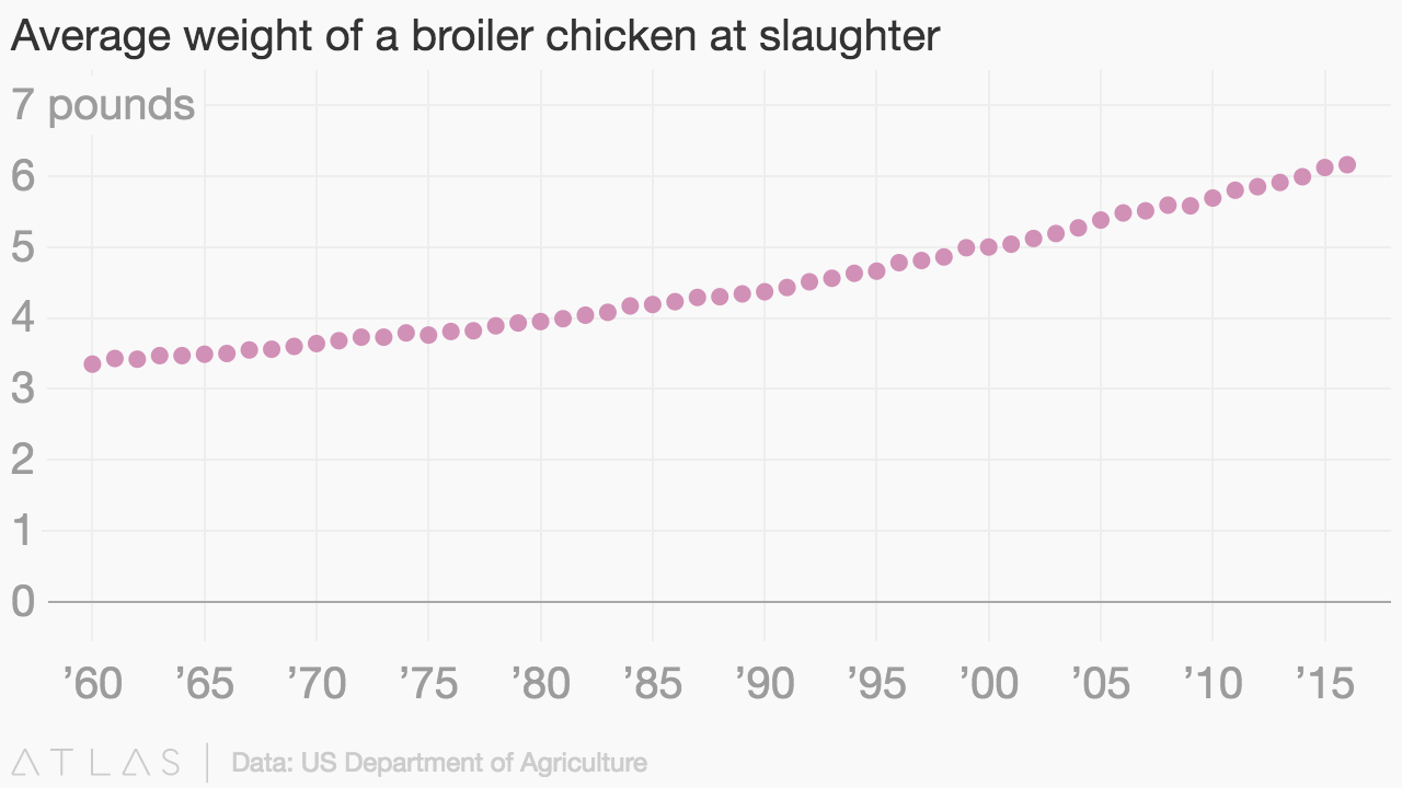 Average weight of a broiler chicken at slaughter embed chart geenschuldenfo Image collections